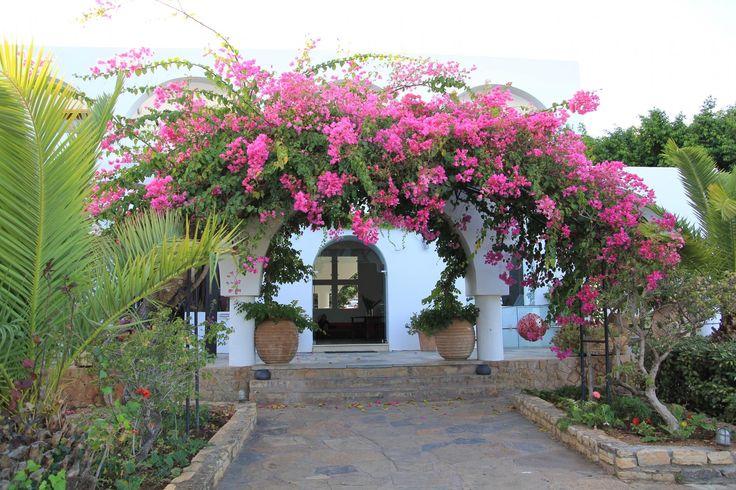 Minos Beach Art Hotel in bloom!   Photo by Oleksandr418
