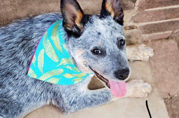 Designer Dog Bandana Dog Clothes Feathers Dog Lover Gift Dog