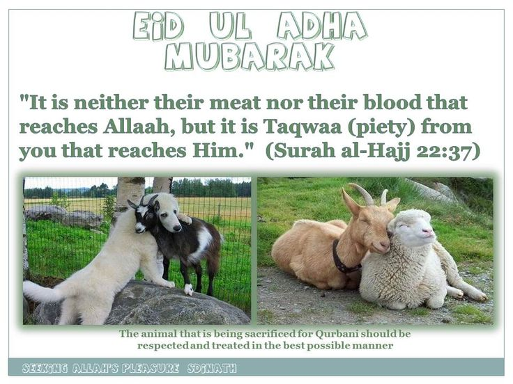 eid ul adha greeting