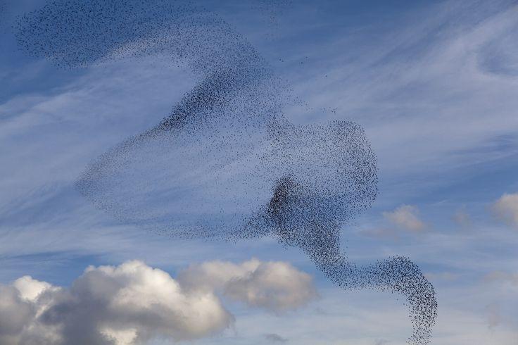 "Inspiration for the lighting object of fused black glass ""Bird Ballet"" by @kackakacka for Sans Souci"