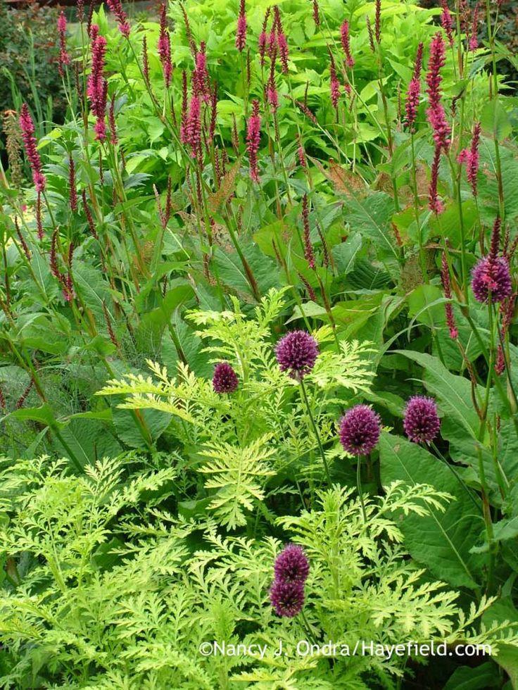426 best garden plant combinations images on pinterest. Black Bedroom Furniture Sets. Home Design Ideas