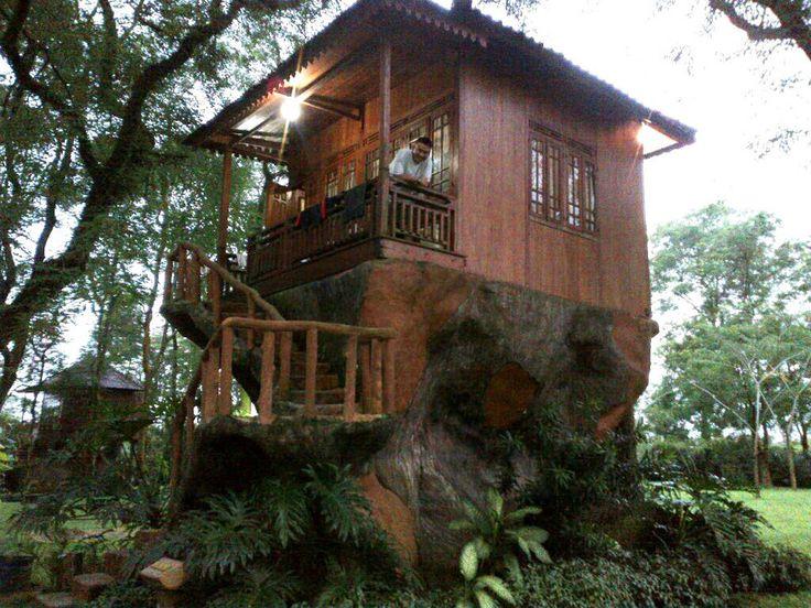Hasil gambar untuk rumah pohon