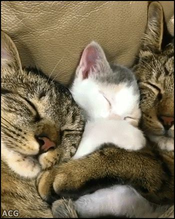 Nap time for 2 Cats + 2 Kittens sleeping together. What a cute puddle of cuddles