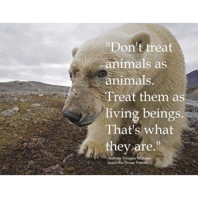 Love polar bears