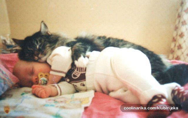 - #cat #baby #spooning