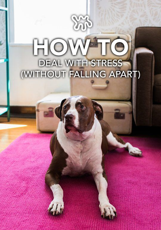 16 best images about Stress Busters on Pinterest
