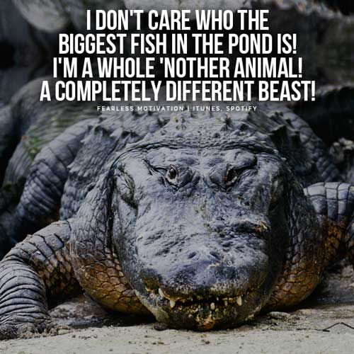 120 best motivational quotes fearless motivation images on for Big fish in a small pond game