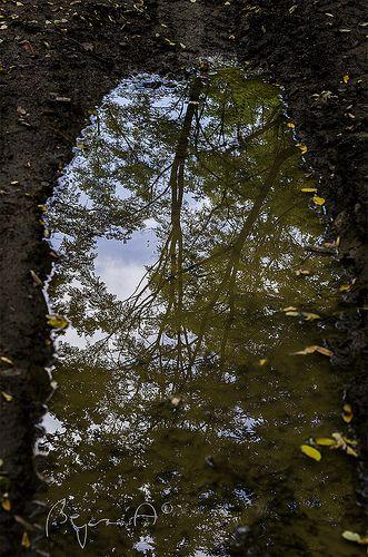Forest's mirror
