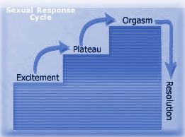 Resolution: Right after Organism comes the resolution phase. The flow of blood reduces into the penis due to the constriction of the internal pudendal artery. Slowly, the penis undergoes detumescence (soft and flaccid). Cardiovascular and respiratory functions return to normal at this point. After resolution follows the refractory period (can last 10 minutes to a few hours) where a man cannot have an erection and orgasm.