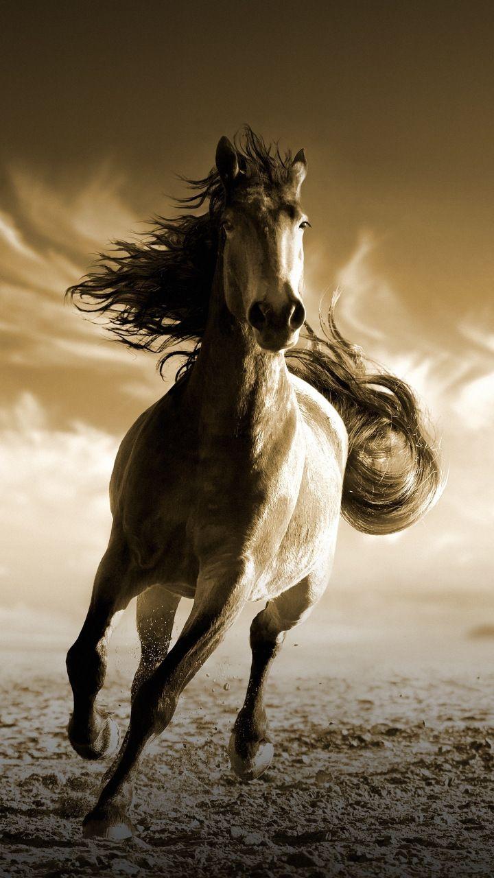 Running Horse Animal 720x1280 Wallpaper N 225 Měty