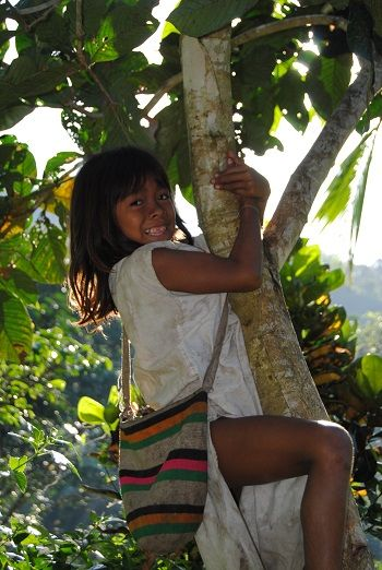 The Kogui kids love the climb in the trees. colombia