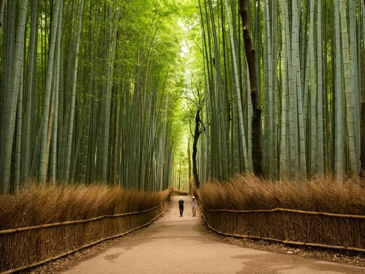 Sagano Bamboo Forest, Kyoto Prefecture, Japan - not just a visual spectacle - the sounds of the forest are among the official 100 Soundscapes of Japan. Picture: Abderazak Tissoukai/500px