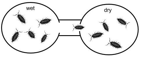 "isopod behavior lab report essay Pill bug lab essay  (""isopod, pillbug, sow bug information"")  isopod behavior lab report  the morning after pill  microelectronic pill."