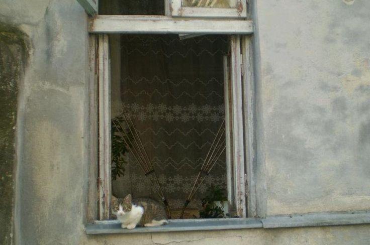Lviv street!