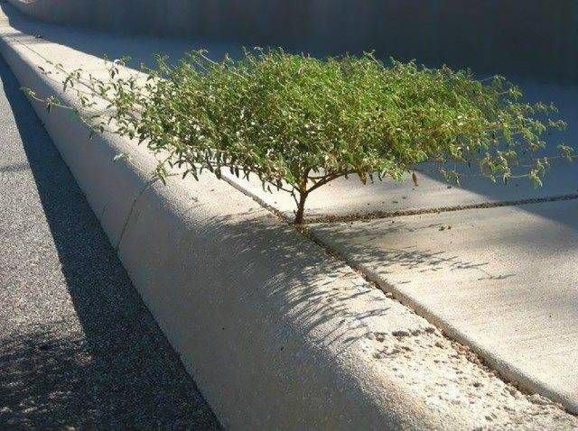 Tree from a crack  Growing Plants That Defy All Odds • Page 5 of 6 • BoredBug