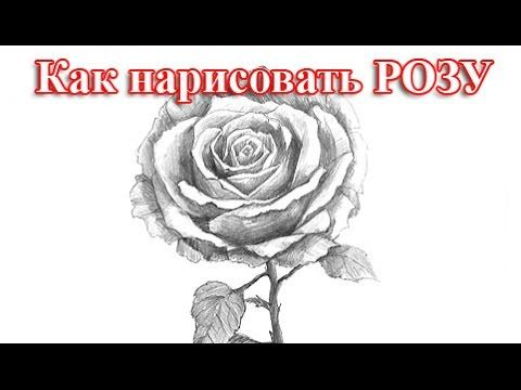 Видео мастер-класс: как нарисовать розу простым карандашом со штриховкой - Ярмарка Мастеров - ручная работа, handmade