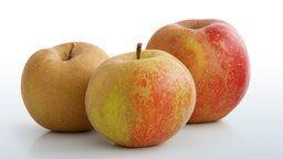 Drei Äpfel der Sorte Boskoop. Alte Apfelsorten