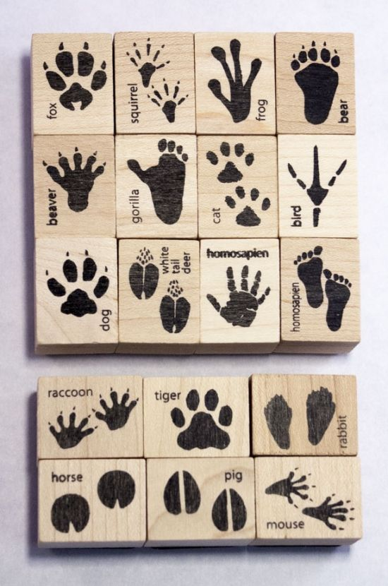 Animal Track & Footprint Ink Stamp Set | Ink Stamps Of Animals' Tracks For Crafts