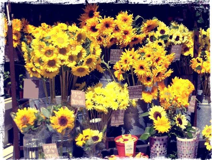 こんにちは〜【bouquet】です.    暑い日がつづきますね(;´▽`A``    街を歩いていたら、ふと、向日葵(ひまわり)が、  いっぱーーーい並んでいるお花屋さんを発見**    明るく元気に咲き誇る姿は、  夏にぴったりのお花ですね!    もう見ているだけで元気をもらえますね〜〃〃