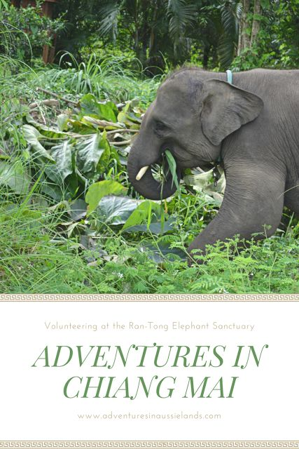This experience will change your life. If you're in Chiang Mai, Thailand be sure to check out the Ran-Tong Elephant Sanctuary