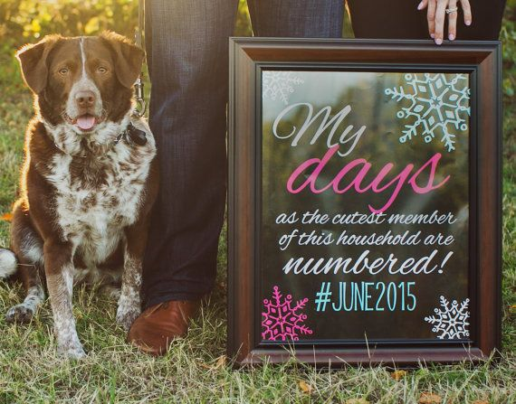 127 best Pregnancy Announcements images – Birth Announcement with Dog