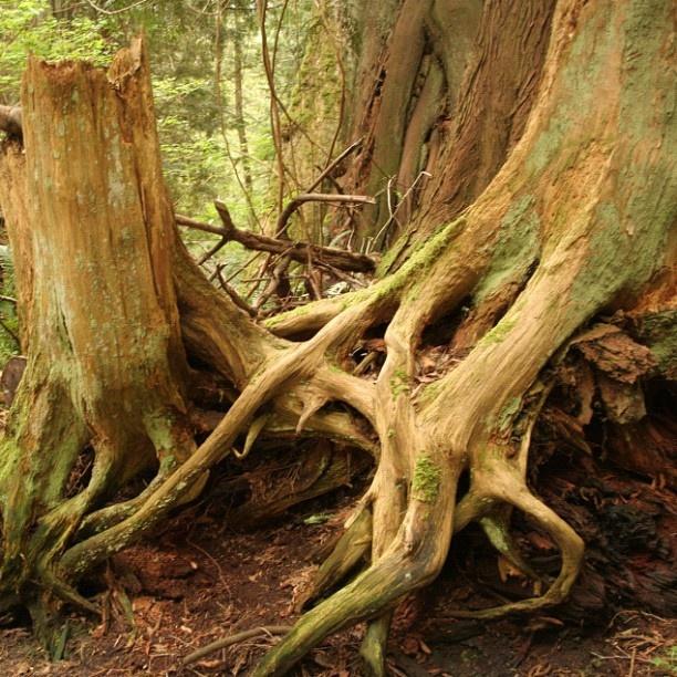 Bowen Island - lake walk  Roots  iphoneography NikNaz K.