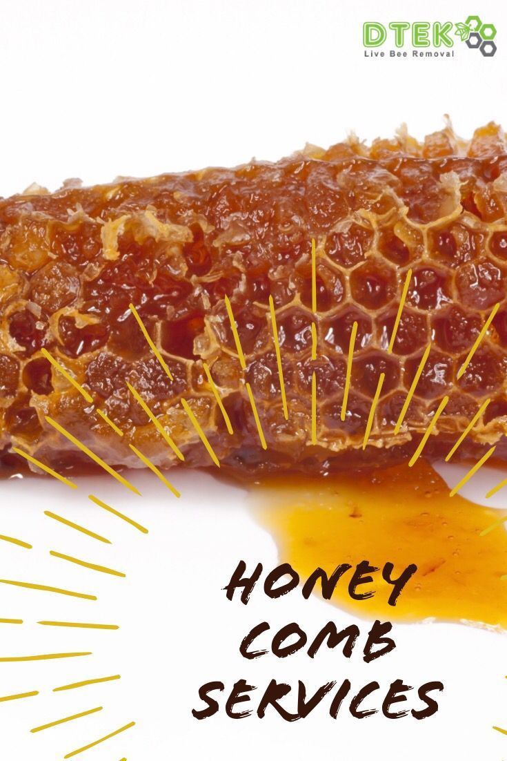 D Tek Live Bee Removal Services Bee Removal How To Remove Bee