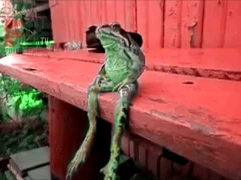 """Video set to music: A Frog Sitting on a Dock of the Bay - see my """"animal"""" board for the original video version (blue bench, no music) Link to this video: http://www.youtube.com/watch?v=Cfca-P8sA7E"""
