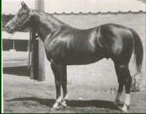 Doc Bar was foaled in 1956. In 1962, Dr. and Mrs. Stephen Jensen purchased Doc Bar from his breeders, Tom and Jack Finley. At 14.3, 1,000 pounds, Doc Bar was a washout on the race track. He wasn't even a performance horse, but he turned out to be a good halter horse and an extraordinary sire whose get totally transformed the sport of cutting. Although he was never ridden in competition, his sons and daughters forever changed the cutting horse industry with their ability and style.