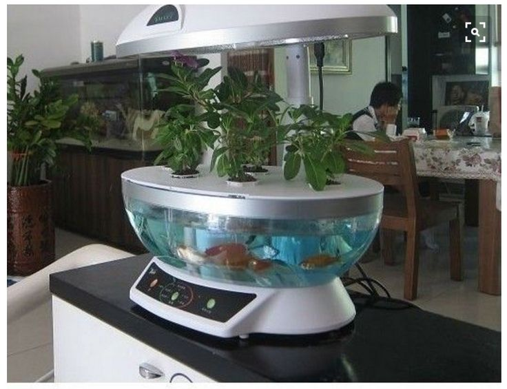 The 25 Best Hydroponic Fish Tank Ideas On Pinterest 400 x 300