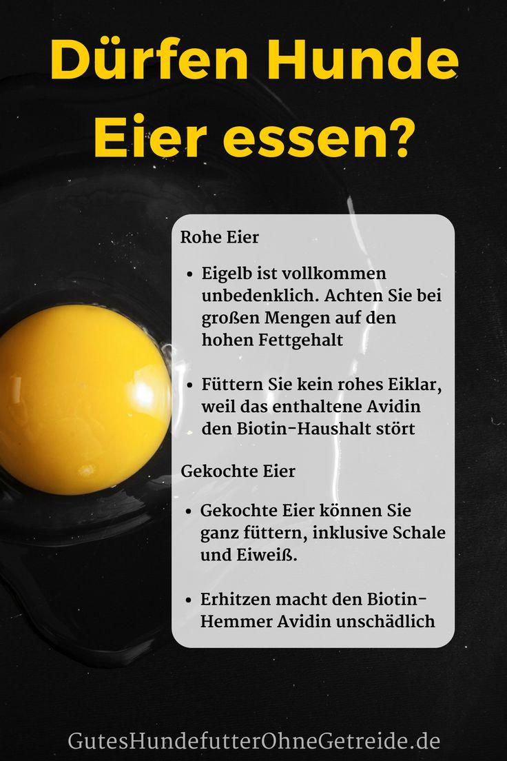 Dürfen Hunde #Eier essen? #Rohes #Ei, #gekocht, #Eierschale #Dotter