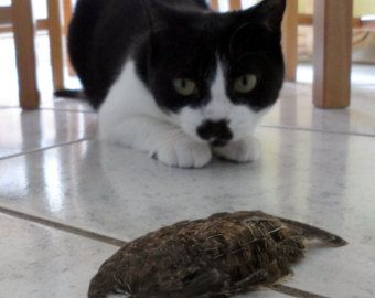 Real Quail Wing Cat Toy