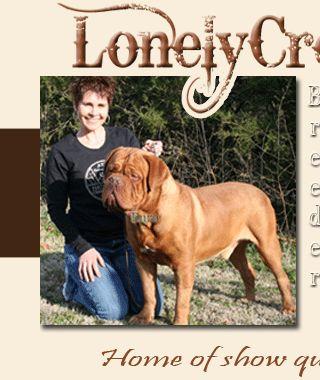 Lonely Creek Kennels in Goshen - $1800 - Bull Mastiff Puppy For Sale Bull Mastiff Dog For Sale Bull Mastiff Breeders Bullmastiff For Sale