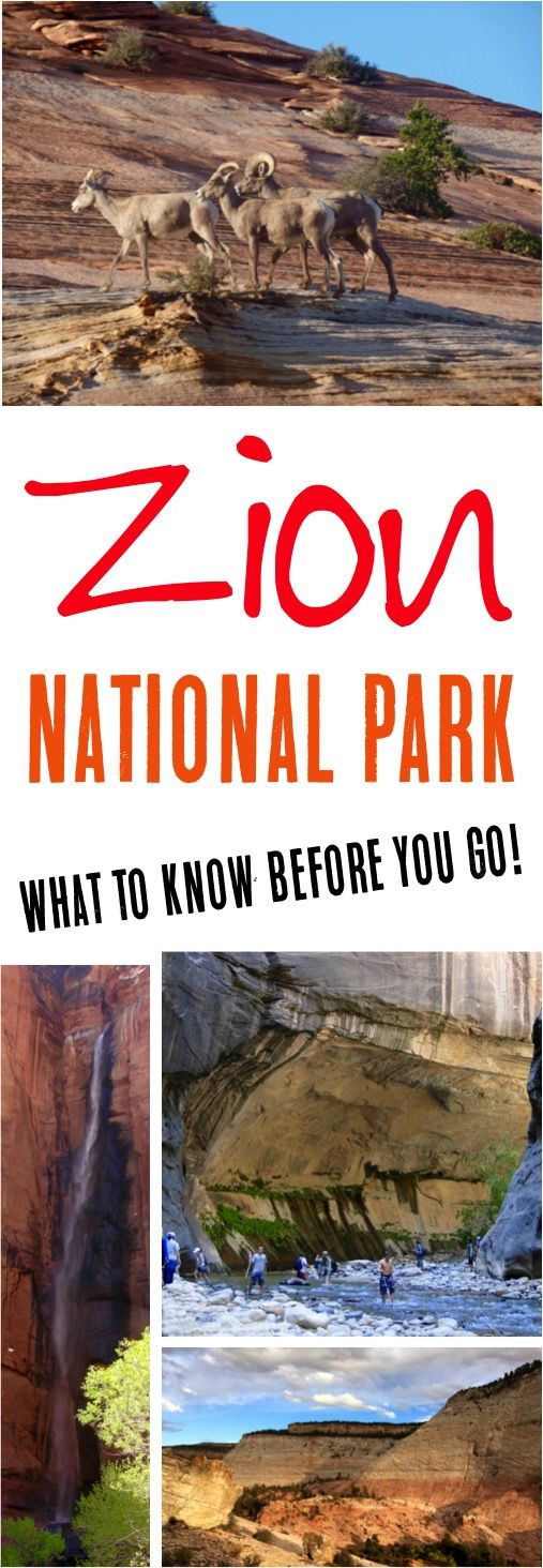 Zion National Park Utah!  Read these top Zion National Park hikes + Zion National Park tips with kids before you go! | NeverEndingJourneys.com