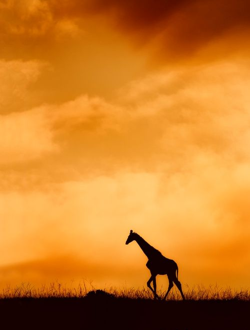 Top 25 Photographs from the Wilderness #11