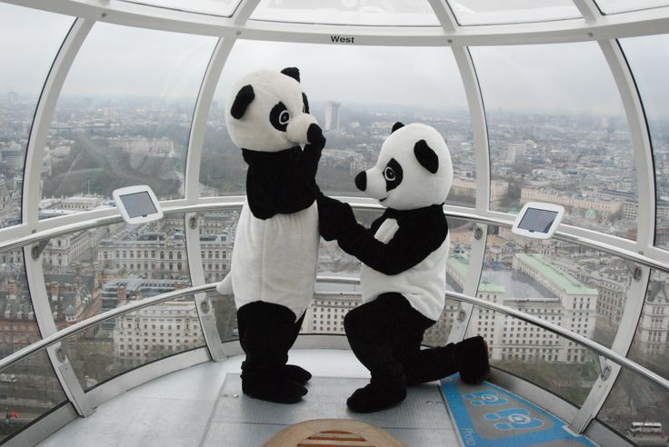 Proposing Pandas riding the EDF Energy London Eye