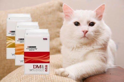 Nowe karmy weterynaryjne dla kotów w naszym sklepie – Purina Veterinary Diets
