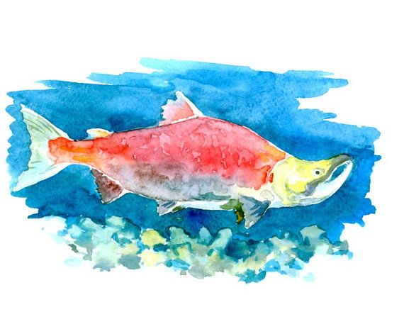 17 best images about salmon on pinterest artworks fish for Fish safe paint