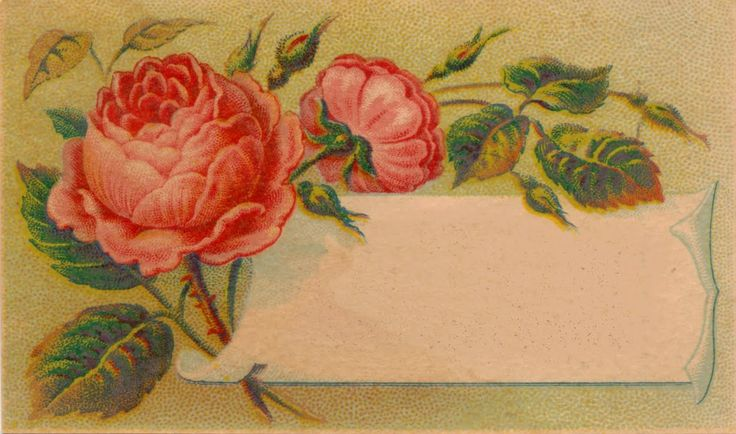 ... and Imagesbykim Free image of the day!: Victorian Calling Card Blank