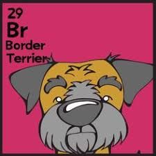 Image result for dog table of elemutts border terrier