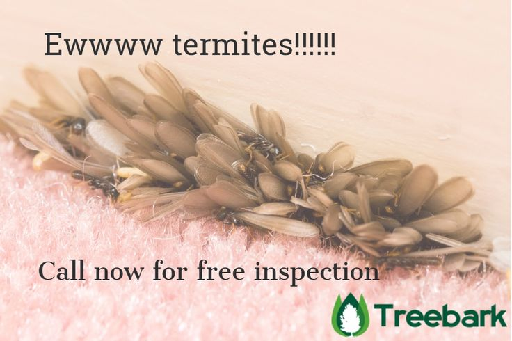 Peculiarities of Types of Termites. For more information visit on this website https://treebarktermiteandpestcontrol.com/cost-of-treating-termites/