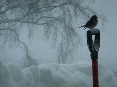 mid-winter~