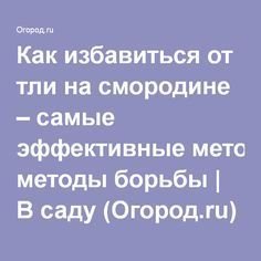 Как избавиться от тли на смородине – самые эффективные методы борьбы   В саду (Огород.ru)