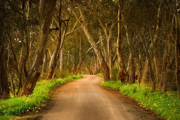 Molly's Chase, Gillentown, Australia — by Lachlan Swan @SwannySA. If you're driving North through the Clare Valley and need a quick detour in between wineries, take a left at...