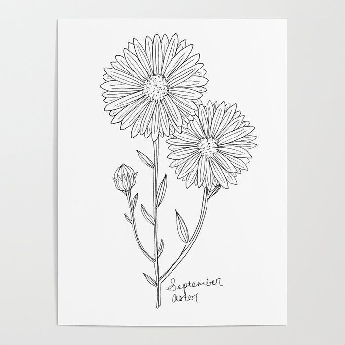 September Birth Flower Aster Ink Drawing Black And White Aster Floral Art Poster By Laura Maxw In 2020 Birth Flower Tattoos Name Flower Tattoo Aster Flower Tattoos