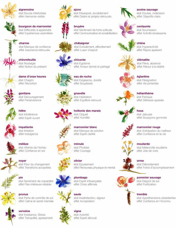 Médecine douce : à quoi servent les Fleurs de Bach ?