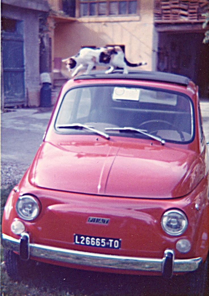 Best Fiat Old Cinquecento Images On Pinterest Fiat Cars Car