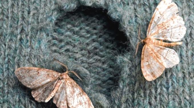 Les vêtements mangés par les mites, vous connaissez ? Cela arrive souvent, surtout lorsque l'on range nos vêtements d'été tout l'hiver en cartons. Heureusement, il existe un truc efficace