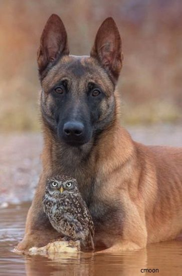 The Owl ~ And The Dog.             (Photo By: Tanja Brandt.)