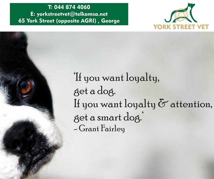 'If you want loyalty get a dog. If you want loyalty and attention, get a smart dog.' - Grand Fairley #YorkStreetVets #Sunday #motivation